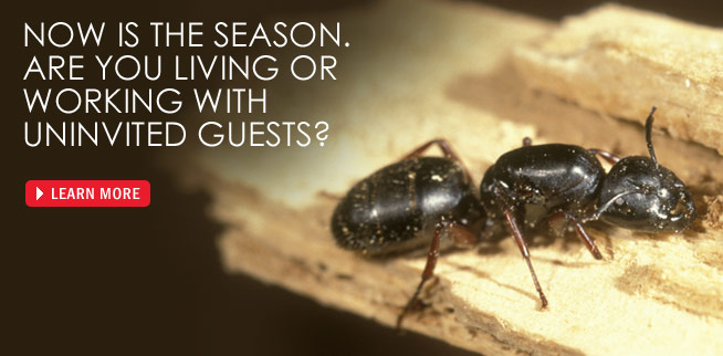 Envirocare gets rid of ants in your home with our pest control treatment services.