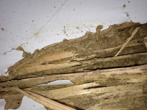 Mud in Termite damage in a Connecticut home.